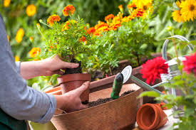 34-Gardening Gardening tips to avoid fungus during summer